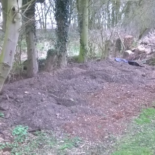 The original site for a new shed is now slowly becoming a new spring garden