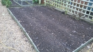 1st Early potatoes in