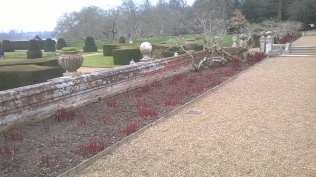 One of two Peony borders- should look splendid in a few weeks time