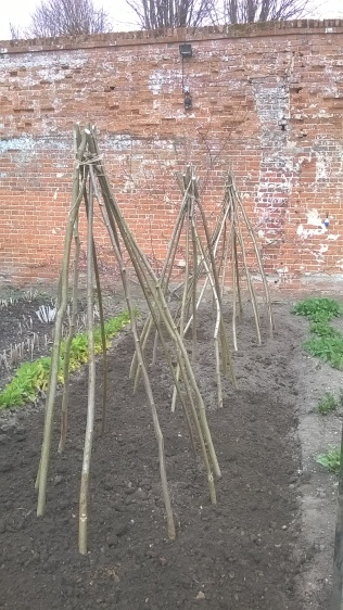 ...and three large 'tents' for Sweet Peas!