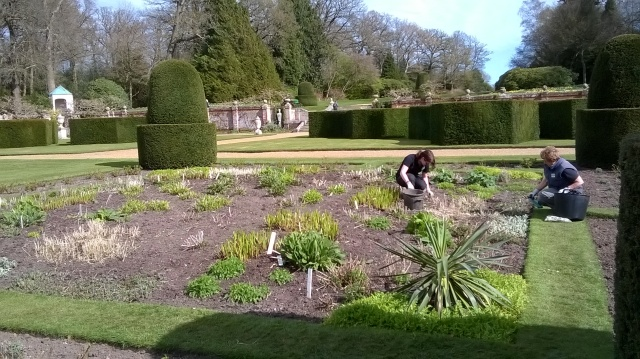 Weeding away in the main parterre borders