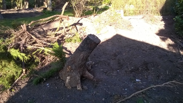 The pond area - with Silver Birch stump removed!