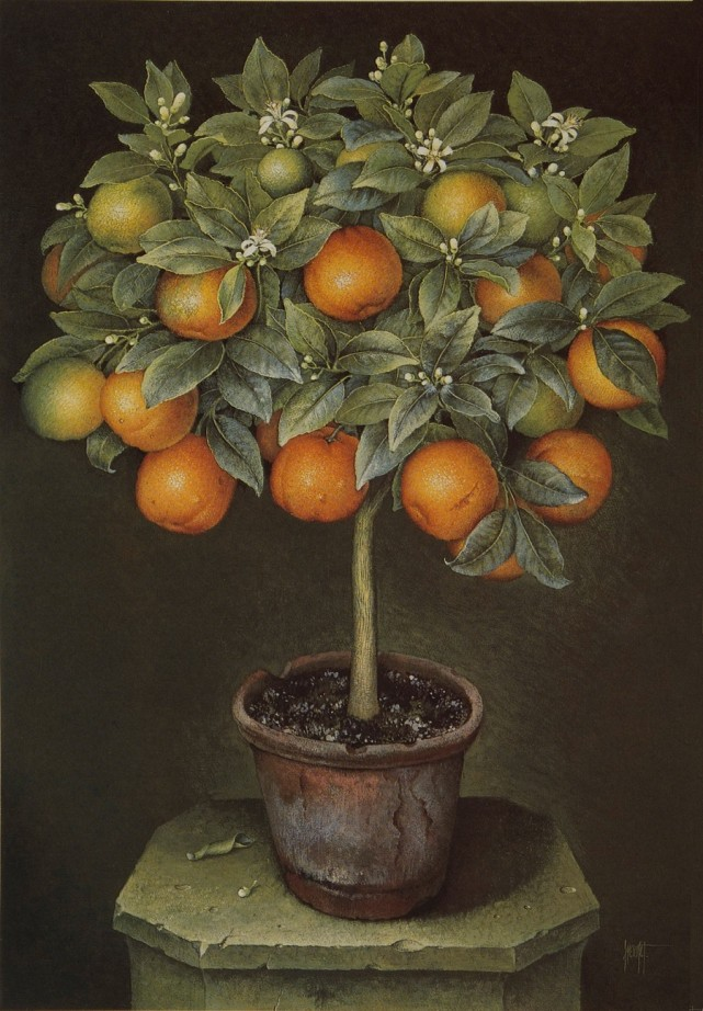 Orange Tree in Terracotta Pot by Jose Escofet