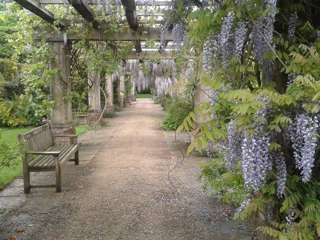 Wisteria Walk, Stoke Poges Memorial Gardens