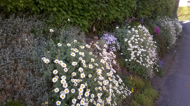 Delightful planting ina Devon Wall, Mohuns Close, Whitchurch