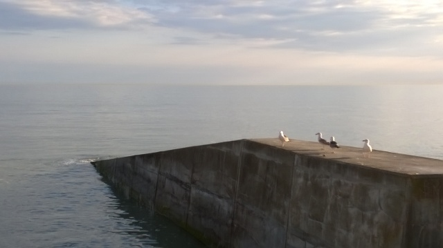 Four gulls on a groyne, Rottingdean, recently.