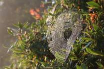 blickling web 2
