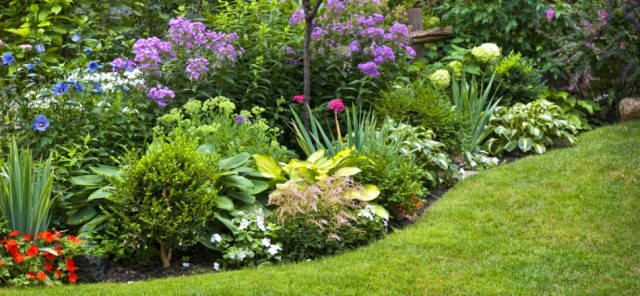 low maintenance flower bed