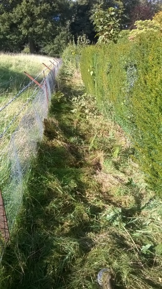 ..space for hedge trimming