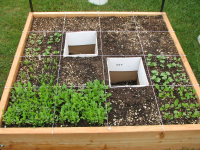'Square Foot Gardening' can help to manage the range, timing and amounts of produce