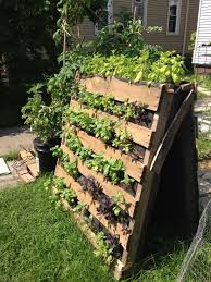 Maximise space by using vertical growing containers like this simple 'A' Frame made from pallets