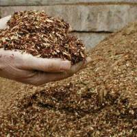 Top Tips: Mulch Magic
