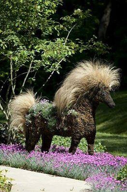 'Pony Tail' grass (Stipa tennuissima)