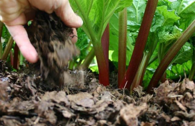 rhs compost
