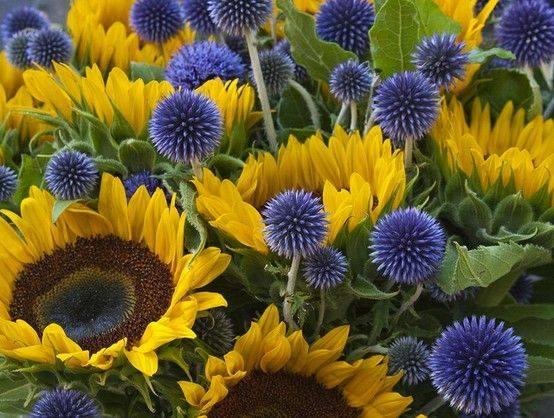 Sunflowers and Echinops