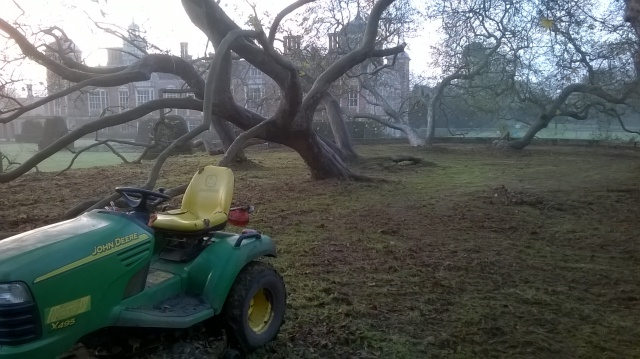 200 year old Oriental Planes after strimming and mowing...