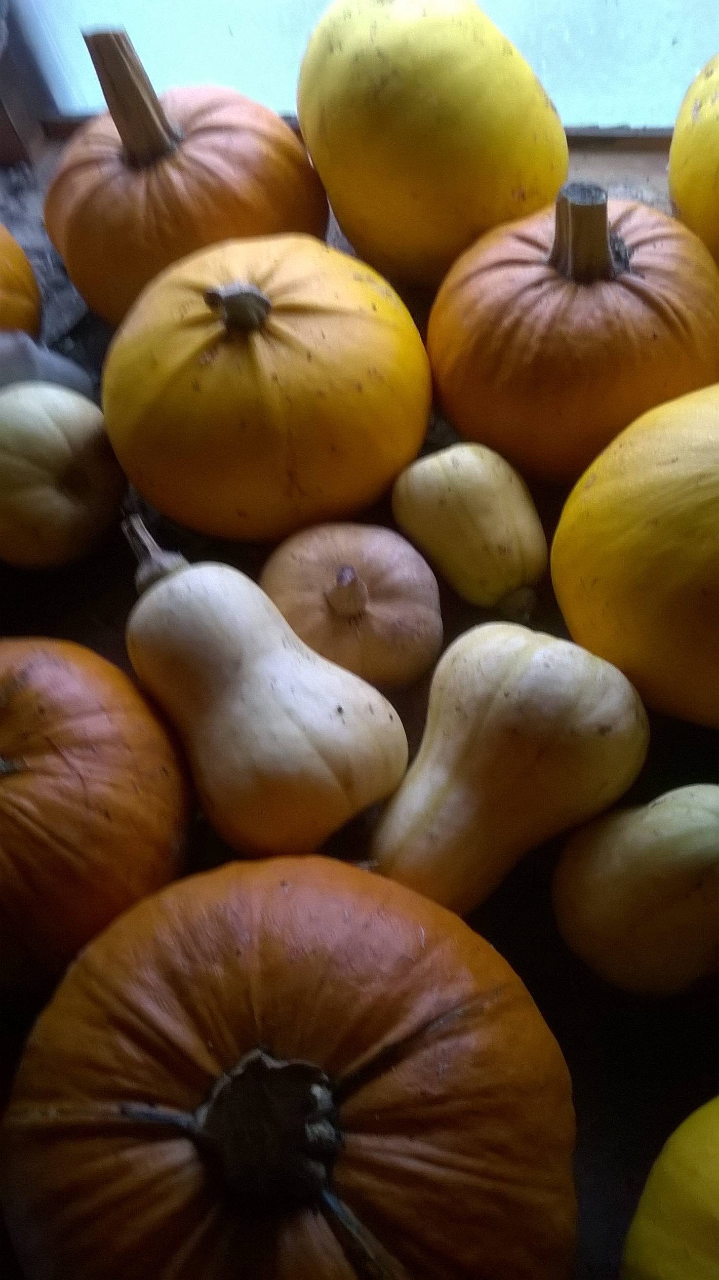 Some of this year's squash harvest- should keep us going for a few weeks.
