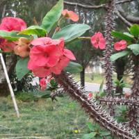 A Select Vietnamese Flora: 2