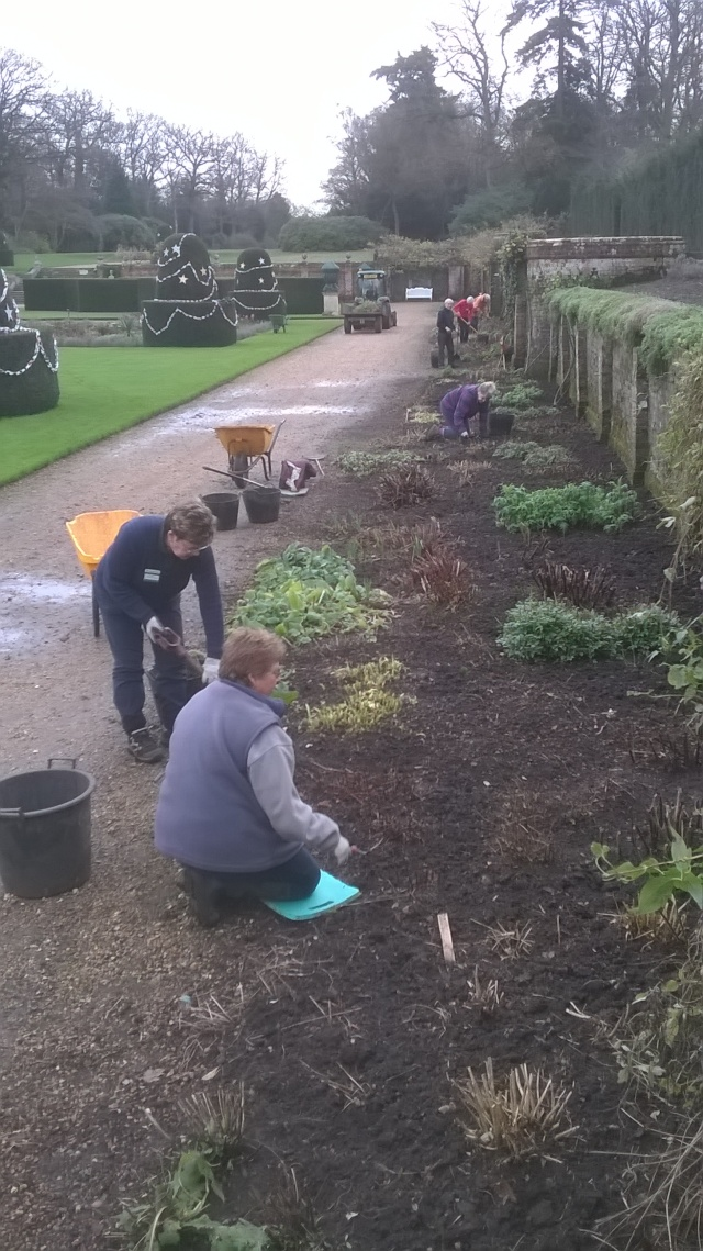 Digging over the parterre border