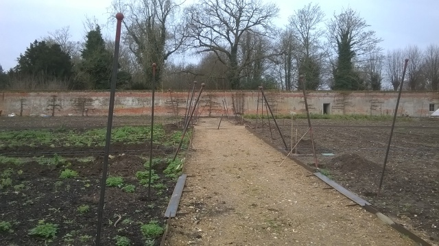 Taking shape- metal posts awaiting fixing alongside the main paths- they will carry a selection of apples and pears trained as fans or espaliers