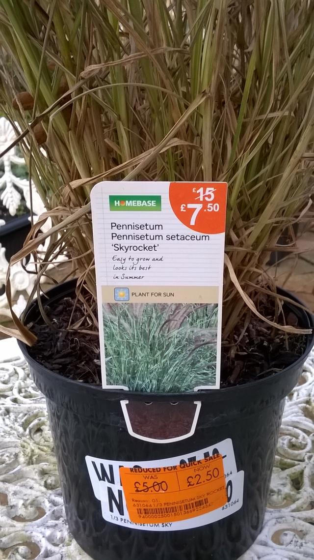 A plant bargain