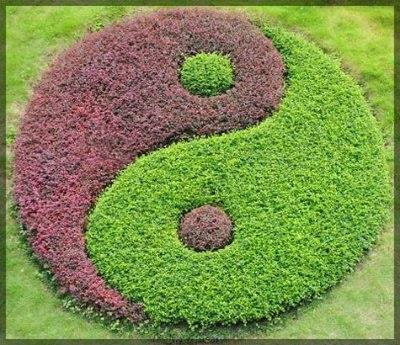 Image result for yin yang annual flower beds display