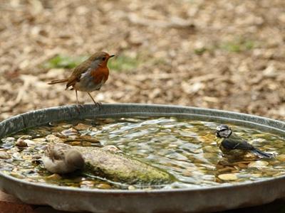 birdbath%20trio.jpg-550x0