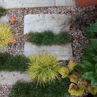 Top Tip: Perfect Paving Plants