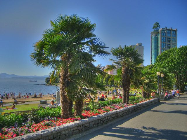 Chusan Palms at Vancouver, Canada. Pic by Keepitsurreal