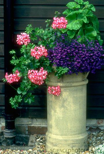 chimney pot planter