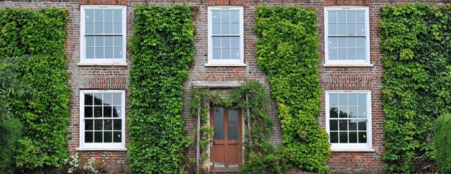 Ivy under control, but it can be a pain getting up the ladders and trimming back annual growth...