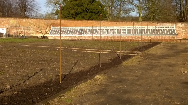 Metal posts installed and mulched underneath in readiness for fruit planting