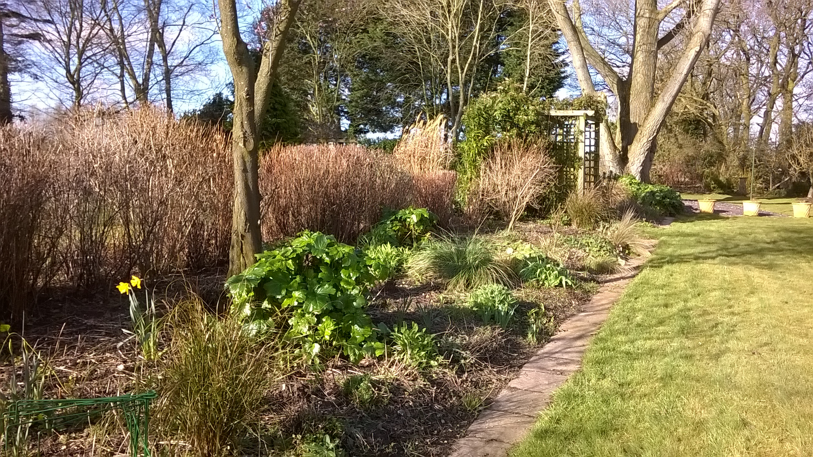 Borders cleared and ready for weeding and soil tickling...