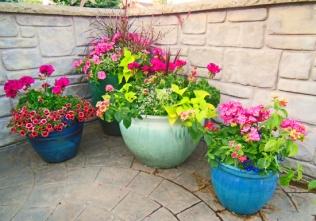 ..as do pots containing similar displays