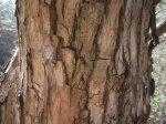 vitex-agnus-castus-rosea-bark