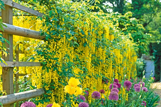 g-yellow-climber-on-fence