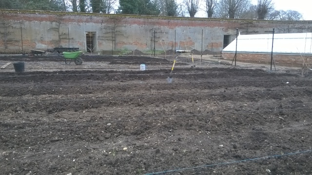 All is mucked in... forked over lines for soft fruit in the Walled Garden