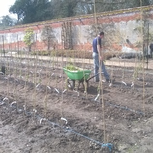 Newly planted fruit bushes beign given 'basic training' by Project Manager Mike..