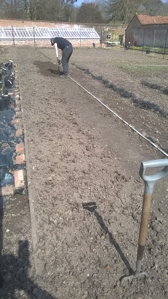 Aussie Pete 'fluffing up' the soil for some grass paths