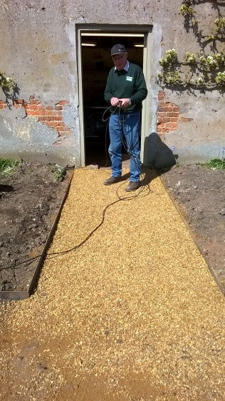 ...and what the paths will eventuially look like...modelled by Norfolk Peter!