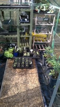 Tomatoes and others under way in the greenhouse...