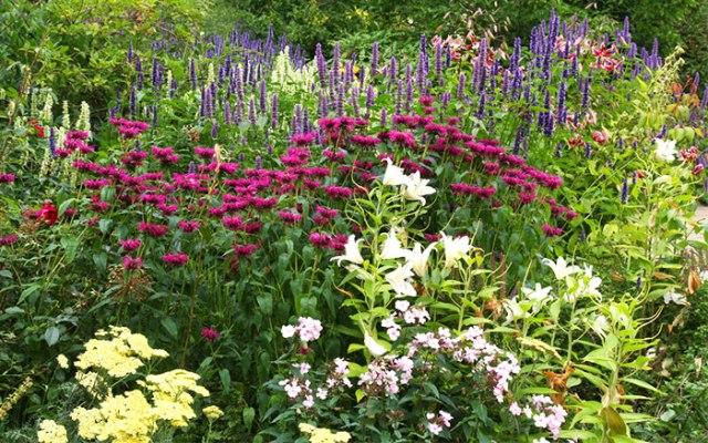 herbaceous-garden-border-plants