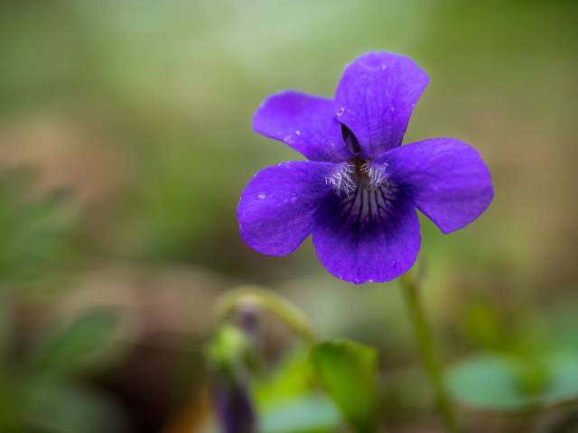 Violet - picture by Sarah Walters