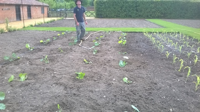 Courgettes planted, Mike watering them in