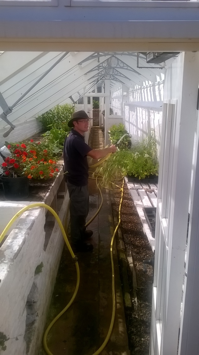 Project Manager Mike waterign in one of  the glasshouses