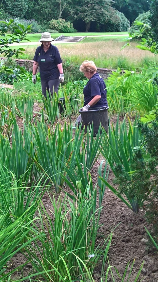 Jane and Pam weeding in the Black Border