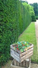 ..just waiting for Ed to finish of the hedges, like this one he'd done earlier...a good eye, eh?