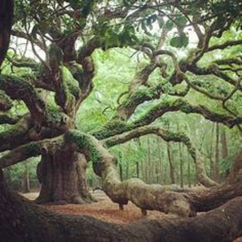 Angel Oak, Johns Island SC- said to be 500 years old