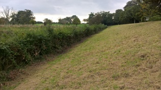 The eastern hedge awaits...