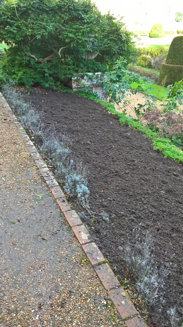 Dug over, ready for Hyacinths